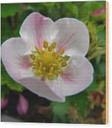 Strawberry Blossom Wood Print