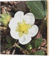 Strawberry Flower 1 Wood Print