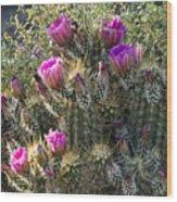 Strawberry Hedgehog Cactus  Wood Print