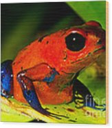 Strawberry Poison Dart Frog Wood Print
