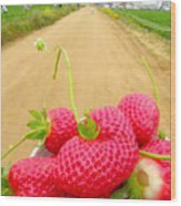 Strawberry Road Wood Print