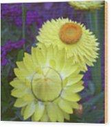 Strawflower Perfection  Wood Print