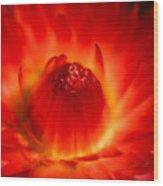 Strawflower Sombrero Wood Print