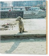 Stray By The River Signed First Edition Wood Print