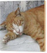 Stray Cat Sleeps On The Floor-1 Wood Print