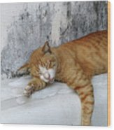 Stray Cat Sleeps On The Floor-2 Wood Print