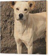 Stray White Dog Wood Print