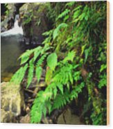 Stream El Yunque National Forest Wood Print