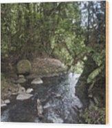 Stream In  Rainforest Wood Print