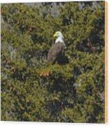 Streamside Eagle Wood Print
