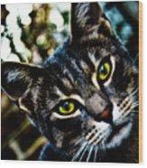 Street Cat II Wood Print