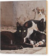 Street Cats - Portugal Wood Print