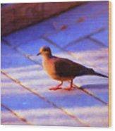 Street Dove Wood Print