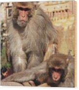 Kathmandu Street Monkeys  Wood Print