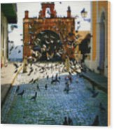 Street Pigeons Wood Print by Perry Webster