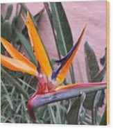 Strelitzia Double Bloom Wood Print