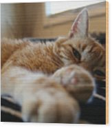 Stretching Cat Wood Print