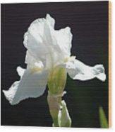 Striking White Iris Wood Print