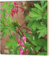 String Of Bleeding Hearts Wood Print