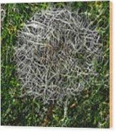 String Theory Dandelion Wood Print