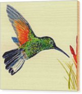 Stripe Tailed Hummingbird Wood Print