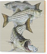 Striped Bass Wood Print by Kevin Brant