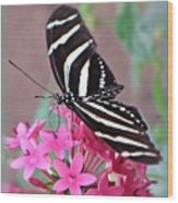 Striped Beauty - Butterfly Wood Print