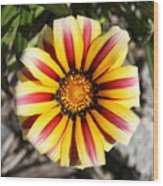 Striped Daisy Square Wood Print