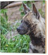 Striped Hyena Wood Print