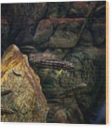 Striped Little Fishes In Aquarium Wood Print