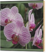 Striped Orchids With Border Wood Print