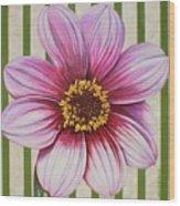 Stripes-dahlia I Wood Print