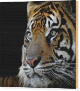 Stripes, No. 11 Wood Print