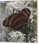 Stripes On Petals Wood Print