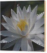 Stripped Waterlily Wood Print