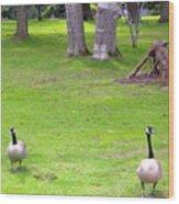 Strolling Canadian Geese Wood Print