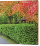 Strolling Path Lined With Japanese Maple Trees In Fall Wood Print