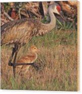 Strolling Sandhill Crane Family Wood Print