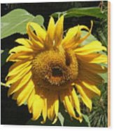 Strolling Through The Sunflowers Wood Print