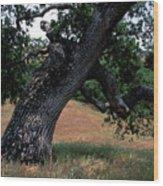 Strong Old Oak Wood Print