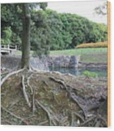 Strong Roots In Japan Wood Print