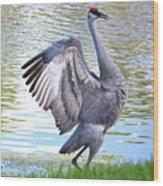 Strutting Sandhill Crane Wood Print