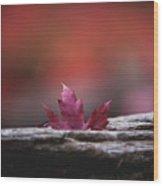 'stuck In Autumn' Wood Print