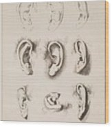 Studies Ears Anonimo, Blooteling Abraham Wood Print
