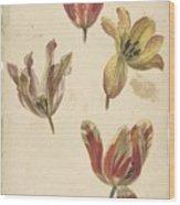Studies Of Four Tulips, Elias Van Nijmegen, C. 1700 - C. 1725 Wood Print