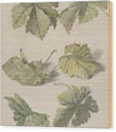 Studies Of Vine Leaves, Willem Van Leen, 1796 Wood Print