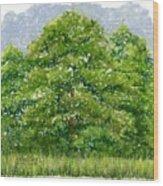 Studio Windows 6-28-08 Wood Print