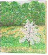 Studio Windows-7-5-08-dogwood Wood Print