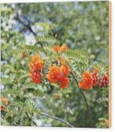 Study In Orange Wood Print