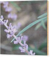 Study In Purple Monkey Grass Bloom Wood Print
